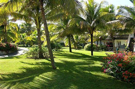 Garden Decoration Mauritius by Jardines Con Palmeras Mis Preferidos Jardines