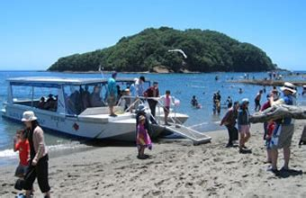 Glass Bottom Boat Tours Nz by Glass Bottom Boat Goat Island Marine Reserve Tours Leigh