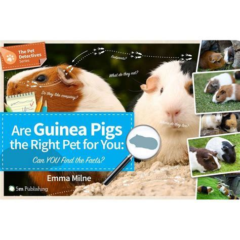 Are Guinea Pigs the Right Pet for You? Guinea Pig Care