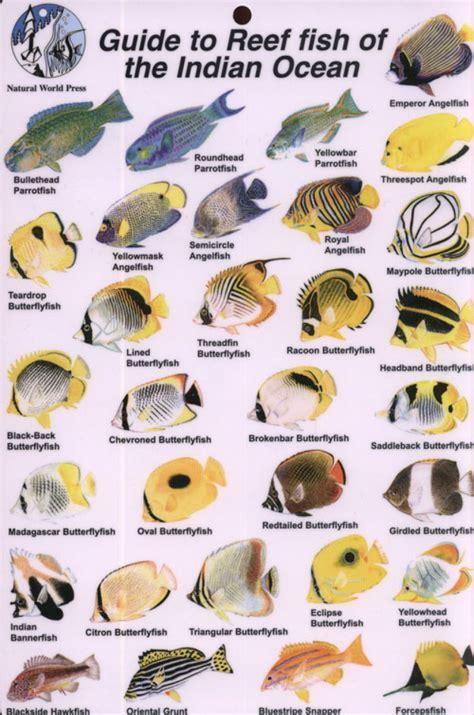 guide  reef fish   indian ocean rod macpherson nhbs