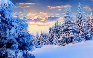 Firs Under Snow Forest wallpapers