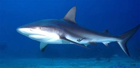 Dolphin Dream Boat Bahamas by Shark Diving Bahamas On The Liveaboard Dolphin Dream