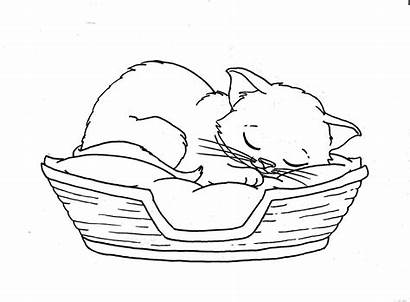 Sleeping Cat Coloring Pages Sleep Cats Drawing