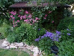 Was Passt Zu Rosen : pflanzen unter obstb umen trauben und rosen mein ~ Lizthompson.info Haus und Dekorationen