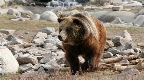 Federal Court Will Hear Oral Arguments On Yellowstone ...