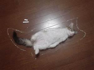 Dead cat - BoreMe