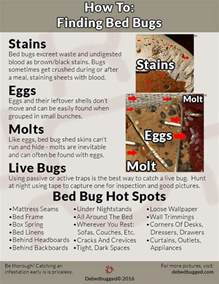 bed bug symptoms find proof get debedbugged