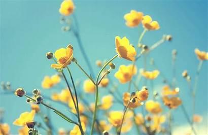 Yellow Flowers Flower Muralswallpaper Plain