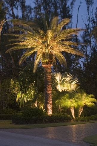 1000 images about plant and palm tree ideas for