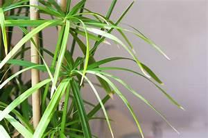 Grande Plante D Intérieur Facile D Entretien : plante d appartement facile d entretien plante verte yuka ~ Premium-room.com Idées de Décoration