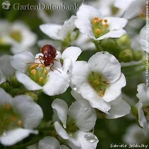 Käfer Im Garten : kaefer im garten fotoarchiv einiger k ferarten bilder ~ Lizthompson.info Haus und Dekorationen