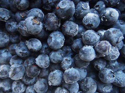 what can you make with blueberries skin benefits of botanical blueberries honey sweetie acres