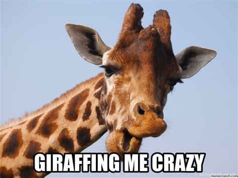 Meme Giraffe - giraffe