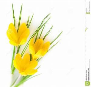 Spring Yellow Flowers / Crocuses Stock Image - Image of ...