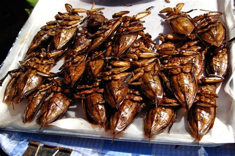 insecte cuisine insects in