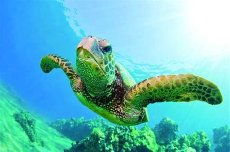 Turtle Canyon Snorkel Cruise by Catamaran provided by ...