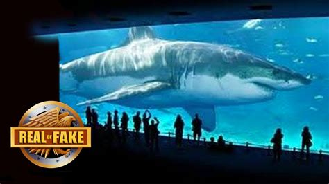 Megalodon Images Billionaire Brings Megalodon Species Back To Real