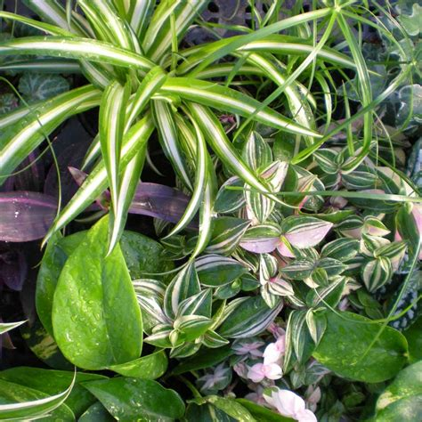 plantes chambre jardins bleus plantes vertes