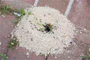 Ameisen Im Haus Woher : ameisen jetzt schnell und sicher bek mpfen bewertet de ~ Lizthompson.info Haus und Dekorationen