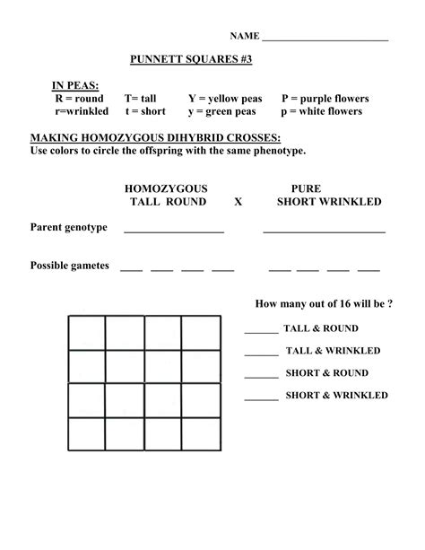 dihybrid cross worksheet worksheets for all and