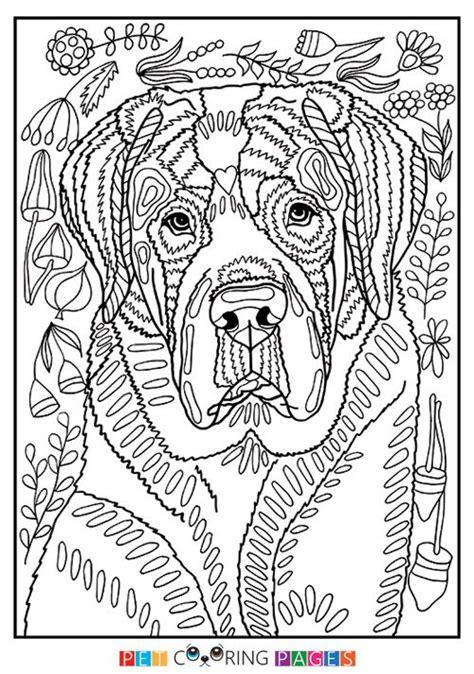 printable saint bernard coloring page