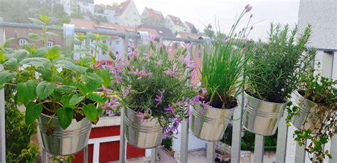 kräutergarten anlegen winterhart 5 winterharte kr 228 uter die auf keinem balkon fehlen sollten