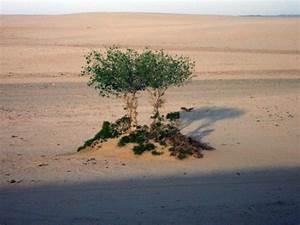 Vegetation Region National Geographic Society