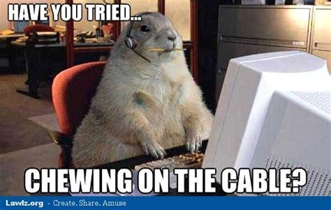 Tech Support Memes - cat tech support