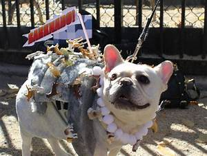 Amazing Costumes From the Thompkins Square Dog Parade ...