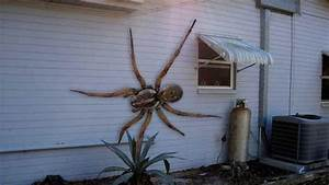 World's Biggest Hawaiian Cane Spider ATTACKS HOUSE - YouTube