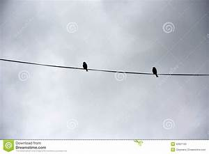 Two Birds On A Wire Stock Photo - Image: 42621163