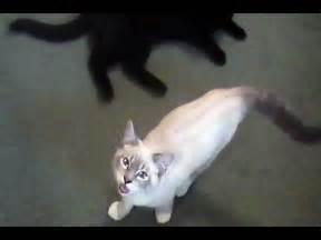 Gibson Talking Kitty Cat