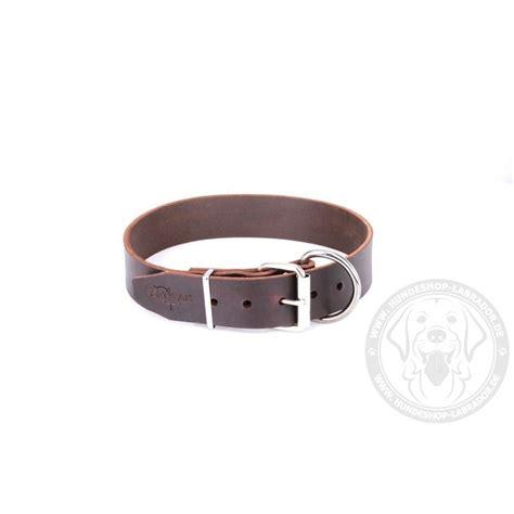 breites hundehalsband aus dunkel braunem leder fuer labrador