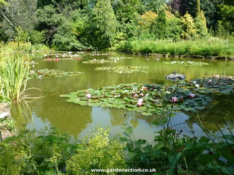 stapeley water gardens centre