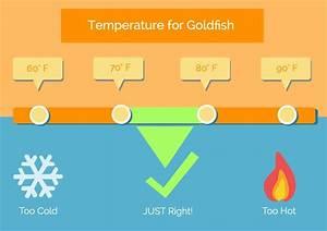 Optimale Aquarium Temperatur : 5 best goldfish tank mates what fish can live with them ~ Yasmunasinghe.com Haus und Dekorationen