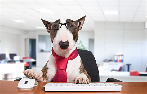 lawyers  bring  dogs   office rocket