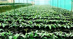Nutmeg Cultivation Information Guide | Agri Farming
