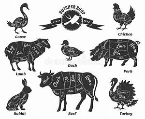 Diagrams For Butcher Shop Stock Vector  Image Of Icon
