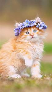 Cute, Kitten, With, Adorable, Flower, Crown