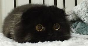 Meet Gimo, The Cat With The Biggest Eyes Ever | Bored Panda