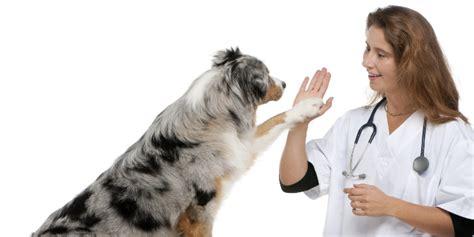 hunde krankenversicherung hund spezial