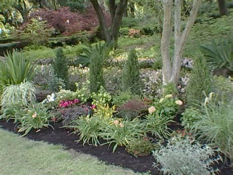 plants for patio borders planting tips ideas diy