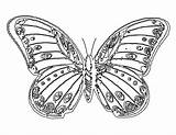Butterfly Coloring Pages Printable sketch template