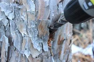 Tuer Un Arbre Avec De L Acide : comment tuer souches d 39 arbre avec du sel zakhad design ~ Dailycaller-alerts.com Idées de Décoration