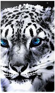 White Tiger Wallpapers Free - WallpaperSafari