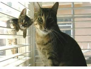 cat bomb lol meme animal photobomb gallery