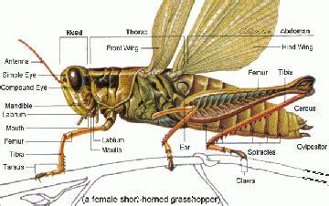 insekti bionet skola