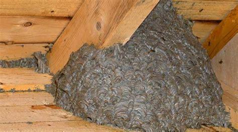 wespennester entfernen feuerwehren sind dafuer nicht