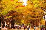 在東京賞銀杏必到的三大景點 | TravelLiker – U Blog 博客