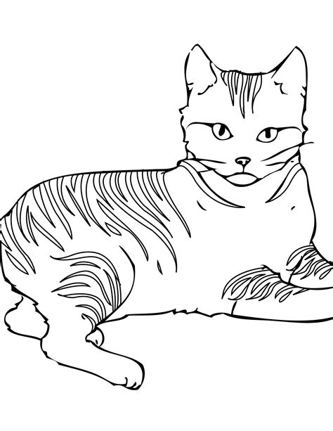 cat pictures to color free printable cat coloring pages for